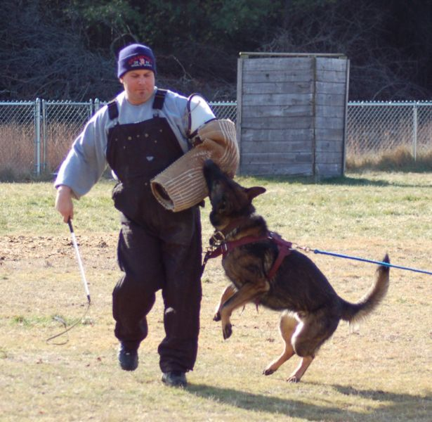 Protection Dog Training Tennessee