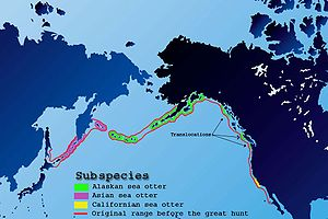external image 300px-Sea-otter-map.jpg