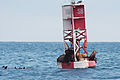 Sea lions 5006.jpg