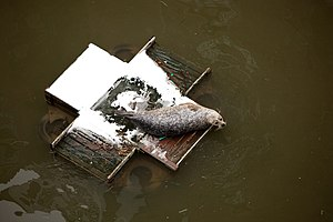St Saviour's Dock - A seal sits on a bird feeding platform in the dock in 2010