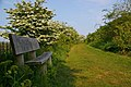 Seat in Cudmore Grove - geograph.org.uk - 422970.jpg