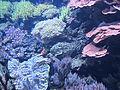 Seattle Aquarium, exhibit - 2012.JPG