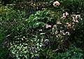 Shady bed - Flickr - peganum (1).jpg