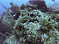 Ship wreck Numidia (1901)2015-05-02 12-45-17 Brothers-5834.jpg