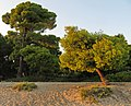 Sithonia, Greece - panoramio (16).jpg