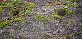 Skålgropar i Pyssestenen.jpg