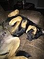 Sleeping Garry.jpg