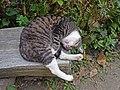 Sleeping cat. - panoramio (1).jpg