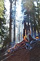 Slide wildfire used for resource benefit, Sequoia and Kings Canyon National Parks, 2002 (6209a369-4fad-408b-ab37-a5657d338b85).jpg