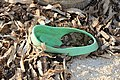 Slippers on the beach of Bantayan 25 sp.jpg
