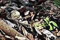 Snake near dandeli waters.jpg