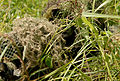 Snipers Compete in Sniper Stalking Event Image 3 of 6.jpg