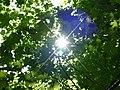 Sole...sole.... - panoramio.jpg