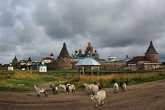 Bolshoy Solovetsky Island -  Goat herd in Solovetsky Islands, Russia