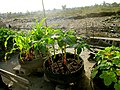 Some SOIL compost is used to support urban gardening projects. (15303741463).jpg