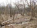 Sovetskiy rayon, Bryansk, Bryanskaya oblast', Russia - panoramio (182).jpg
