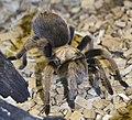 Spider (5639964112).jpg