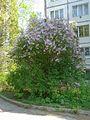 Spring - 28 (2012). (30204326636).jpg