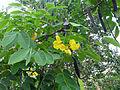 Sri Lanka (Southern Province)-Vegetation (2).jpg