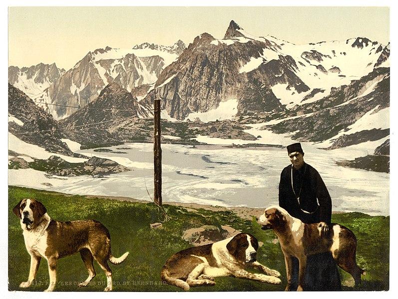 File:St. Bernard dogs, Valais, Alps of, Switzerland-LCCN2001703326.jpg