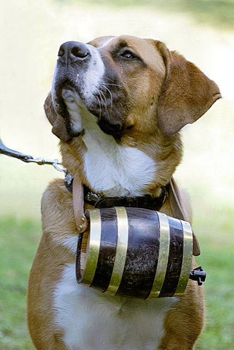 Great St Bernard Pass - St. Bernard dog with barrel.