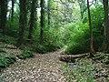 Staddiscombe Woods - geograph.org.uk - 55974.jpg