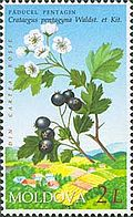 Stamp of Moldova md503.jpg