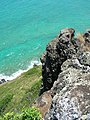 Starr-050419-0447-Digitaria insularis-habit-Mokolii-Oahu (24119249163).jpg