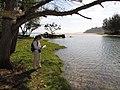 Starr-130319-2939-Bacopa monnieri-habit with Kim by Kilauea stream-Rock Quarry Beach Mokolea Pt Kilauea Pt NWR-Kauai (25208406975).jpg