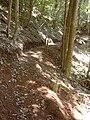 Starr 040730-0034 Eucalyptus sp..jpg