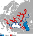 Starry sturgeon Acipenser stellatus distribution map.png