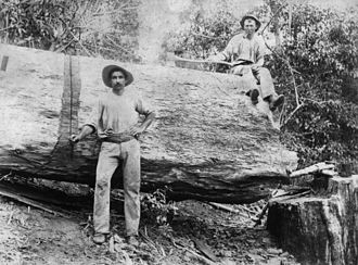 Bundaberg - Timber workers