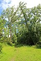 Steenbergse bossen 36.jpg