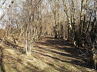Stockbury Hill Wood