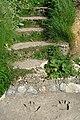 Steps to Llanbadrig Beach - geograph.org.uk - 669081.jpg
