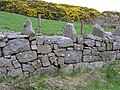 Stone wall, Grenaghnagee - geograph.org.uk - 782608.jpg