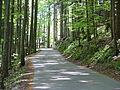 Straße zum Falkenstein - panoramio.jpg