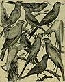 Strawbridge and Clothier's quarterly (1883) (14780134341).jpg