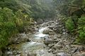 Stream on Heaphy Track.jpg