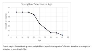 Antagonistic pleiotropy hypothesis evolutionary explanation for senescence