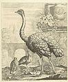 Struisvogel en kalkoenen in een tuin met antieke ruines.jpeg