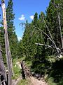 Swiss National Park 108.JPG