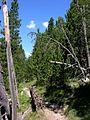 Swiss National Park 108.JPG