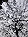 TREE - panoramio.jpg