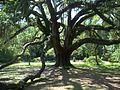 Tallahassee FL Lichgate Oak02.jpg