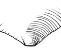 Talon puntiforme.png