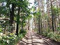 Tambovsky District, Tambov Oblast, Russia - panoramio (6).jpg