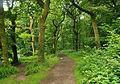 Tarr Steps Woodland 2.jpg