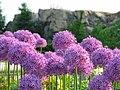Temple flowers wide.jpg