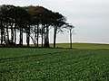 Ten Pound Plantation - geograph.org.uk - 273560.jpg